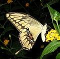 ComputerHotline - Papillon (by) (7).jpg