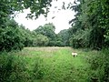 Conservation walk on Underley Farm - geograph.org.uk - 492407.jpg