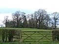 Copse of Elms, near Marton - geograph.org.uk - 155439.jpg