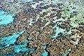 Coral Reef from above 2.jpg