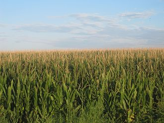 Prowers County, Colorado - Image: Cornfields in Prowers County, CO IMG 5771