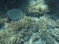 Costa Cabo de Gata 06.JPG
