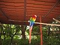 Costa Rica (6094248789).jpg