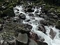 Cours d'eau et Biotope (2).jpg
