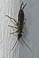 Creepy crawlies wildlife@home (32258469774).jpg