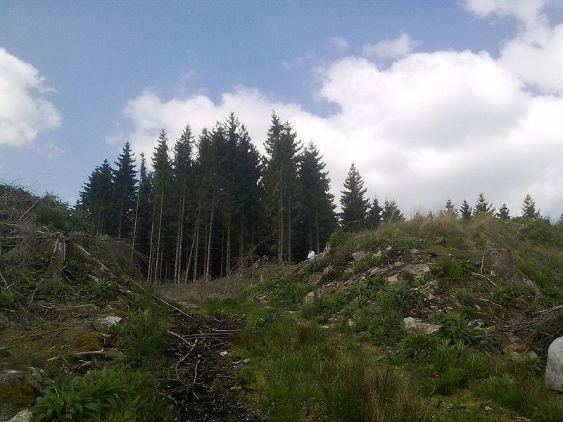 """Site dit """"du camp romain"""" sur la crête dominant l'Ourthe au Nord de Lavacherie, sur l'éperon de Baseilles. Traces de levées de terre significatives visibles dans le relief local. Selon A. Hock, fortin d'Ambiorix."""
