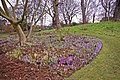 Crocus bed, Kew Gardens, Surrey - geograph.org.uk - 1186114.jpg