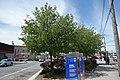Cross Bay Bl Pitkin Av td 05 - Panzarella Triangle.jpg