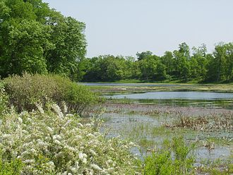 Three Rivers Park District - Crow-Hassan Park Reserve has miles of trails leading through woods and restored native prairie.