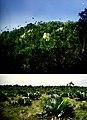 Cuba - Camagüey, Sierra de Cubitas (2006) (20614659018).jpg