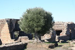 Roman ruins of São Cucufate - The farmhouse and ruins of the complex