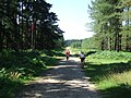 Cycling Through The Forest - geograph.org.uk - 516318.jpg