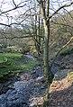 Cynllaith stream in woodland - geograph.org.uk - 386781.jpg