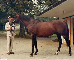 Damascus (horse) - Damascus at Claiborne Farm in 1981