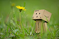 Danbo and Dandelion (8727612532).jpg