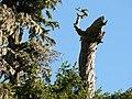 Dead tree (daf6f7d42ffe46dea59cfbc5cfc4b84b).JPG