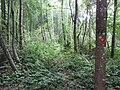 Degučių sen., Lithuania - panoramio (258).jpg