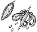 Dehiscene (PSF).png