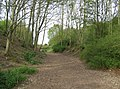 Dell at Basing Lime Pits - geograph.org.uk - 780450.jpg