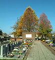 Dendermonde St-Gillis Kerkhof.jpg