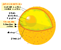 Diagram human cell nucleus sk.svg