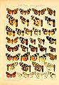 Die Gross-Schmetterlinge der Erde (Taf. 18) BHL9921425.jpg