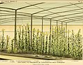 Die mutationstheorie. Versuche und beobachtungen über die entstehung von arten im pflanzenreich (1901) (20312971713).jpg