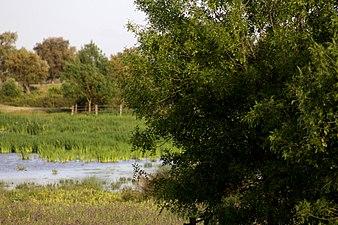 Doñana.jpg