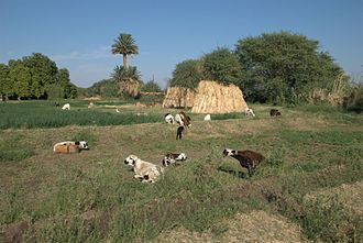 Northern state, Sudan - A field in Dongola
