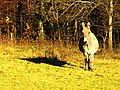 Donkey With Shadow - panoramio.jpg