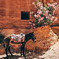 Donkey looking for shade in Petra, Jordan (Unsplash).jpg