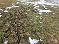 Dornbirn-disapered field mouses passages-03ASD.jpg