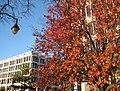 Downtown Memphis Tree in Fall - panoramio.jpg