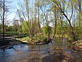 Drażniew, rzeka Toczna - panoramio (4).jpg