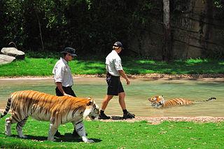 Tiger Island (Dreamworld)