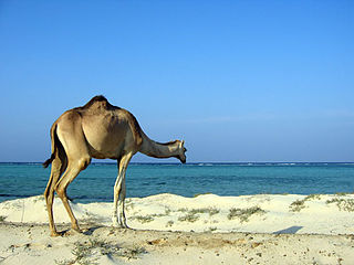 Marsa Alam Place in Red Sea Governorate, Egypt