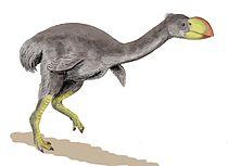 Dromornis BW.jpg