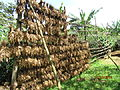 Drying beans in mbale.JPG