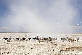 Пыль Облако в Этоше Национального Park.jpg