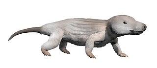 <i>Dvinia</i> Genus of basal cynodonts