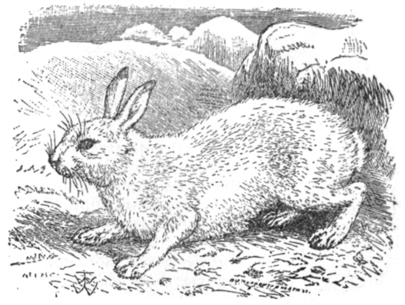 EB1911 - Hare Fig 2.png