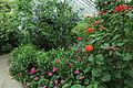 Edvard Andersons växthus-IMG 1551.jpg