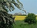 Ein Feld im Mai - panoramio.jpg