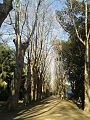 El hamma Garden.jpg