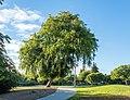 Eleanor Pardee Park (41501).jpg