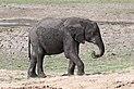 Elephant in Chobe National Park 02.jpg