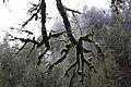 Elkhorn Creek Wild and Scenic River (10873842766).jpg