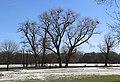 Englischer Garten Winter Muenchen-4.jpg