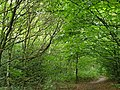 Epping Forest 20170727 112235 (49374905032).jpg