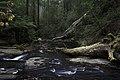 Erskine Falls (15229170728).jpg